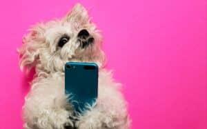 Smart dog using smart phones on pink background.